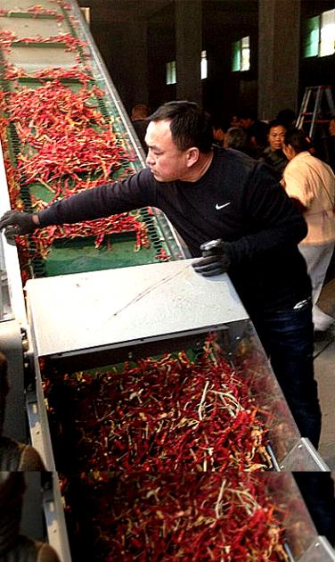 董事长给客户工厂指导辣椒去把机设备使用
